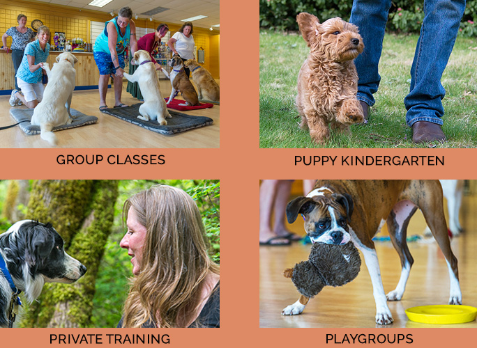 Group classes private training